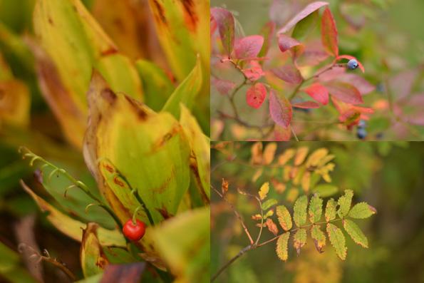 Efterårets flotte farver