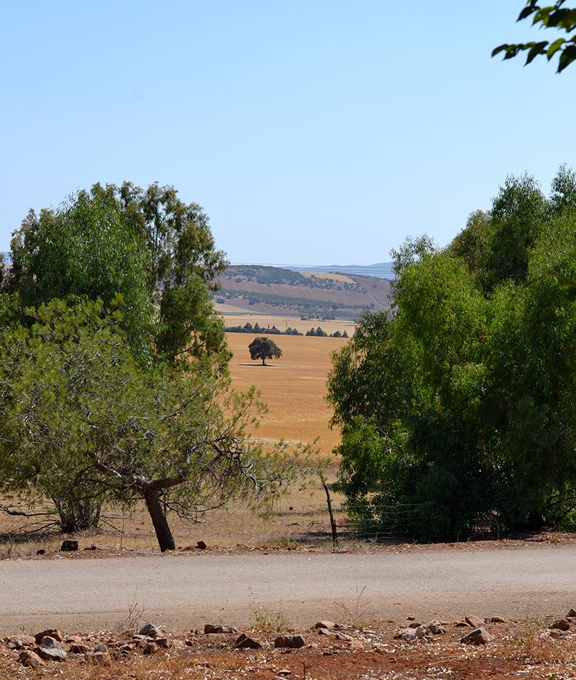 Udsigt til oliventræ
