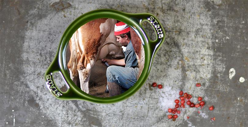 Malkning af koer