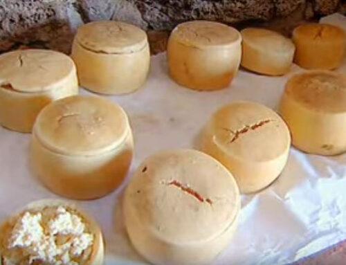 Casu Marzu – historien om miderne i osten