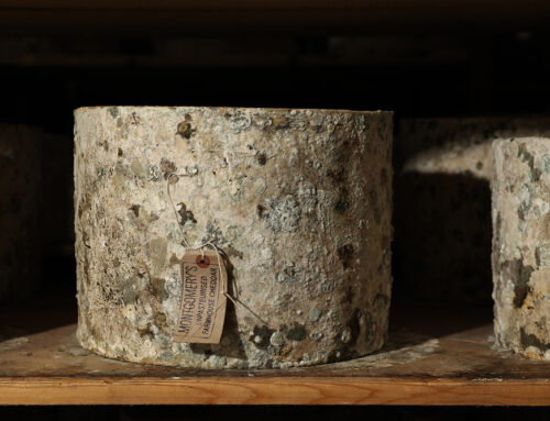 Nyt eventyr som ostekommunikatør