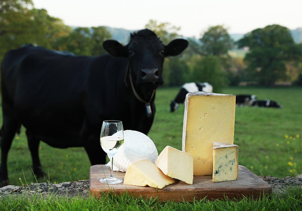 Cheese Journeys in UK